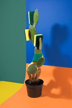 art direction | cactus + sponge color block still life photography