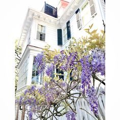 What a Friday afternoon in Downtown Charleston! Lots of folks in town for Fashion Week in addition to the various garden tours and…