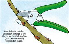 Wer einen Hochstamm in der Baumschule kauft, bekommt meist ein Bäumchen, das seine Triebe wild entschlossen in den Himmel reckt. An solchen…