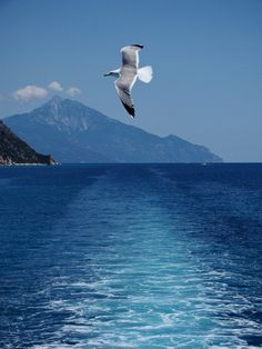 A seagull and the magnificent Mt. Athos in Northern Greece