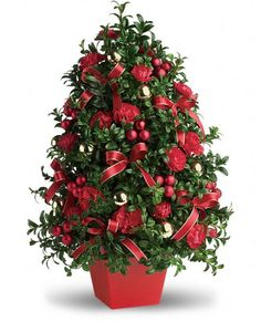 USA Plants - Deck the Halls Tree