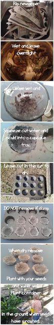 DIY Seedling Trays