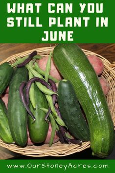 It's June, but it's not to late to get a few more veggies planted in your vegetable garden. These vegetables can be planted in June and you will still have time to get a harvest this summer. Fall Vegetables, Veggies, Organic Gardening, Gardening Tips, Vegetable Gardening, Veggie Gardens, Container Plants, Container Gardening, Growing Onions From Seed