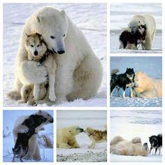 Polar Bear Pup | Polar bear's new best friend | Cute Puppy ...