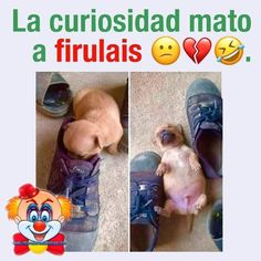 Spanish Jokes, Funny Spanish Memes, Mexican Memes, Funny Quotes, Funny Memes, Funny V, Lol, Anime, Easy Drawings