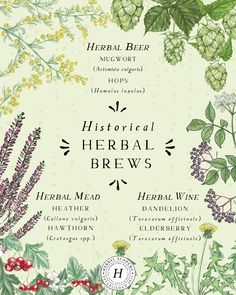 Herbal Beer: An Ancient Drink for Modern Times – Herbal Academy Healing Herbs, Medicinal Plants, Herbal Tea Benefits, Beer Recipes, Homebrew Recipes, Drink Recipes, Herbal Magic, Tea Blends, Herbal Medicine