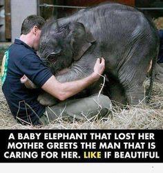 Baby elephant hug.