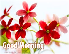 Good Morning - Best Pictures, Animated Pics and Wishes. #GOODMORNING http://greetings-day.com/good-morning-best-pictures-animated-pics-and-wishes.html