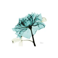 Teal Rose 2 Wall Art Print ($17) ❤ liked on Polyvore featuring home, home decor, wall art, wall-cover, teal home accessories, wall posters, interior wall decor and rose wall art