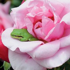 Celebrate Each New Day New Day, Cartoon, Frogs, Celebrities, Type 3, Nature, Flowers, Summer, Pink