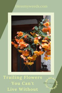 Get ready to grow at blessmyweeds.com. Check out simple resources for growing successful garden plants. Find your next plant with this guide to growing trailing flowers. Trailing Flowers, Garden Plants, Garden Ideas, Finding Yourself, Gardening, Simple, Awesome, Check, Painting