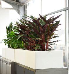 Terren Kübelpflanzen | 11 Besten Baumhaus Gmbh Raumbegrunung Pflanzenpflege Bilder Auf
