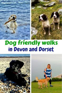 Andrewshayes Holiday Park has some Perfect Beautiful Relaxing East Devon Dog Pet Friendly WALKS for you all to go on. Enjoy the stunning Devon Countryside. Dog Friendly Holidays, Pet Dogs, Pets, Dog Walking, Dog Friends, Devon, Walks, Woodland, Your Dog