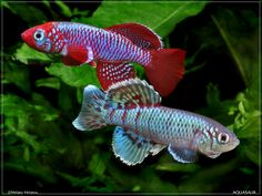 Killifish- Killi means cute :)