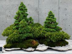 Le Bonkei, un paysage en miniature