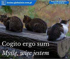 Cogito Ergo Sum, Gold, Yellow