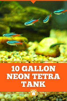 Neon Tetra, Aquarium Supplies, Fish Care, Goldfish, Betta, Pet Supplies, Guppy, Animal, Neon