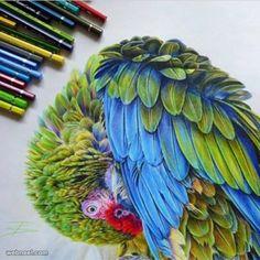 Bird color pencil drawing by tattootatiana http://webneel.com/25-beautiful-color-pencil-drawings-valentina-zou-and-drawing-tips-beginners | Design Inspiration http://webneel.com | Follow us www.pinterest.com/webneel