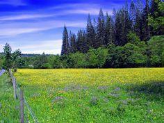 20 imágenes de paisajes naturales, animales, rosas y cascadas...   Banco de Imagenes