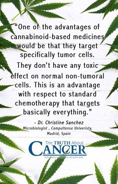 The marijuana plant has been used in just about every culture for centuries. Surely you've also heard that it is quite widely used for medicinal purposes, including by those who are faced with cancer. Ty Bollinger gives us the scoop! Click through to discover how this miracle plant helps the body heal. Please re-pin to support us on our mission to educate, expose, and eradicate cancer naturally! <3