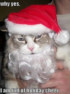 Just Call Them Santa Claws | HO HO NO | He's in a holi-daze.