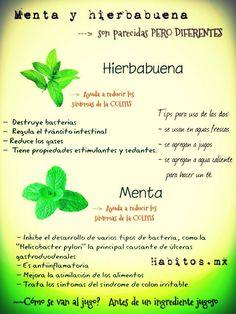 Los beneficios de la menta y la hierbabuena! :D