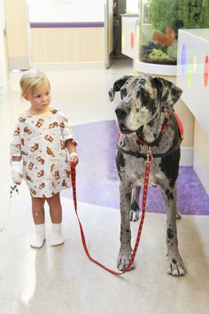 """Walk THIS way! Harper takes a break from being in her room at Renown Children's Hospital to take Pet Therapy Dog Great Dane """"JJ"""" on a stroll."""