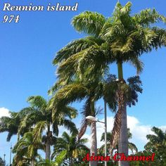 #reunionparadis#reunionisland#team974#cocotiers#sky#ciel#ile#lareunion#iledelareunion#ileintense#islandparadise#island#974island#974#gotoreunion#photo#instaisland#photoamateur#loveisland#paysage#monile#myisland#skyporn#otélaréunion#monpays#hello#### by aimachannelyt