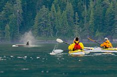 Whales and Wilderness tours