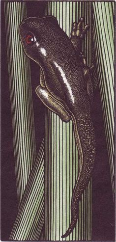 Tadpole.  Hand-colored engraving. Price: $80. Abigail Rorer & The Lone Oak Press