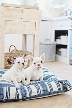 Vintage French Ticking Dog Bed