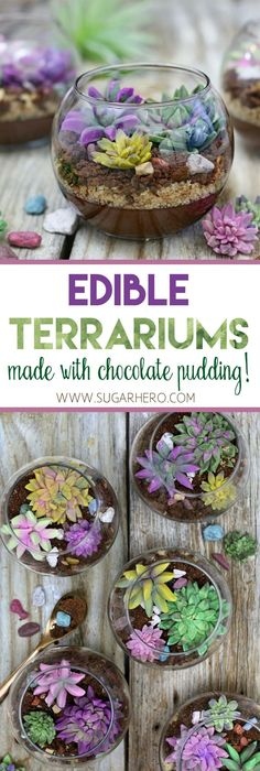 Edible Terrariums - a fun, totally edible dessert that looks just like a terrarium! Made with chocolate pudding, cookie crumbs, and fondant succulents. | From SugarHero.com #terrarium #succulents #cactus #pudding