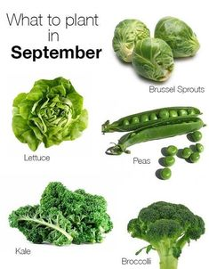 Vegetables Gardening What to plant in september Organic Gardening, Gardening Tips, Urban Gardening, Urban Farming, Container Gardening, Growing Winter Vegetables, Fall Vegetables To Plant, Gardening Vegetables, Winter Plants