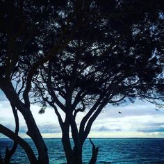 #ocean #sea #rocks #pier #sky #cold #mornings #clouds #timber #freezing #sky #light #weather #winter #august #stone #earth #beachlife #destination #scenery #photography #instagram @australiagram @australia_shotz @australia @ig_australia__ @wow_australia @austtraveller @cruising_australia @earthfocus @earthofficial @earth.awesome @scenery098 @explore_with_mladz @explorevictoria @welivetoexplore @exploreheaven @explore.eat.style