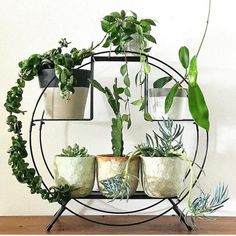 40 Awesome Indoor Plants Decor Ideas For Your Home And Apartment - Trendehouse Indoor Garden, Indoor Plants, Indoor Plant Stands, Indoor Balcony, Plant Table, Deco Nature, Balcony Furniture, Diy Furniture, Interior Plants
