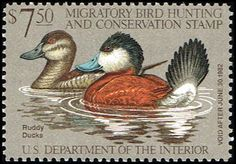 US RW48 Stamp Ruddy Ducks Duck Stamp US RW48-1 MNH  (http://www.bmastamps2.com/stamps/united-states/us-rw48-stamp-ruddy-ducks-duck-stamp-us-rw48-1-mnh/)
