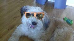 Groan! #dog #jokes (but not dog eating jokes)