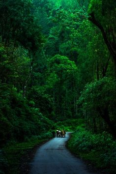 Cowherd with his cows Photo by Anil Gowda — National Geographic Your Shot