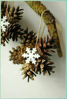 Snowflake pinecone - Pine Cone Crafts for Kids #Snowflake #pinecone #Pine #Cone #Crafts #for #Kids Easy Christmas Decorations, Christmas Crafts For Kids, Holiday Crafts, Christmas Diy, Christmas Wreaths, Christmas Ornaments, Yard Decorations, Christmas Projects, Pinecone Crafts Kids