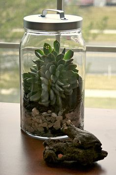 Succelent in a Jar - inexpensive and hard to kill!