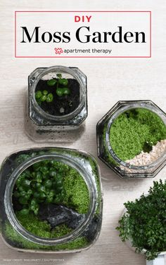 To Grow Your Own Moss - Sustainable Gardening wedding Terrarium succulentes Growing Moss, Growing Plants, Gardening For Beginners, Gardening Tips, Flower Gardening, Garden Plants, Indoor Plants, House Plants, Air Plants