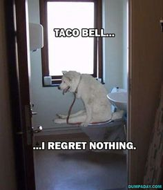 15 Funny Dogs Who Have No Regrets @Colleen Sweeney Sweeney Sweeney Regan #noregrets