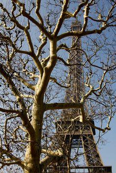 Eiffel Tower, Paris VII