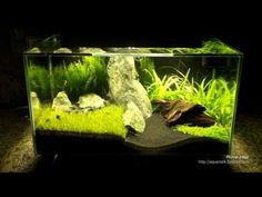 Fluval Edge mit extra Beleuchtung...