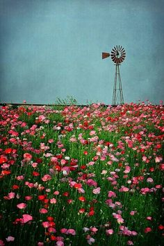 Windmill & wild flowers---reminds me of the plains. Farm Windmill, Old Windmills, Wind Of Change, Country Scenes, Old Barns, Le Moulin, Beautiful World, Beautiful Moments, Wild Flowers