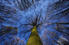 canopy by cardigankate, via flickr