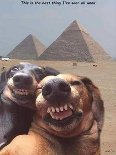 Funny Animal Jokes, Funny Dog Memes, Cute Funny Animals, Animal Memes, True Memes, Stupid Memes, Animal Quotes, Memes Humour, Funny Cat Fails