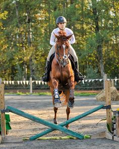 Hi am Lola slava owner of rose peak academie , we rescue and give new jobs to Ottb's and bad treated horses we mainly focus On getting better every day. We Teach xc,show jumping,dressage and western .