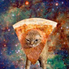 พิซซ่าแมว