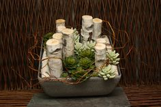 Simple Christmas Table arrangement of Birch and Succulents. Why couldn't we add a few baubles for a bit of colour?